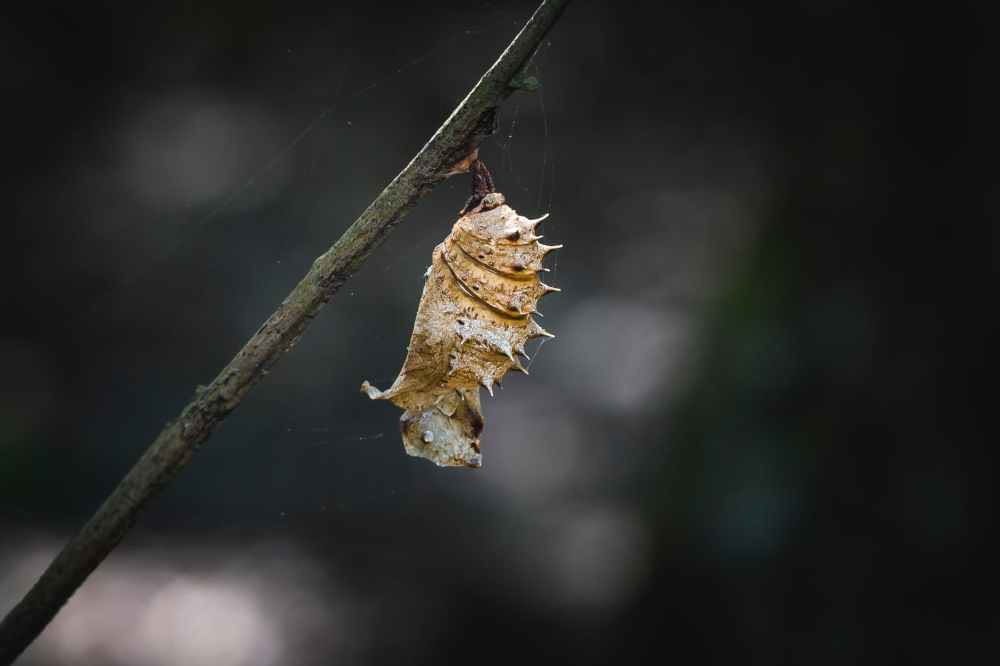 bokeh photography of brown pupa